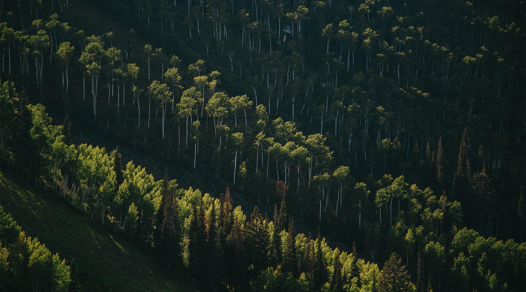 Appel à participation : Projet de verdissement Vert le Nord