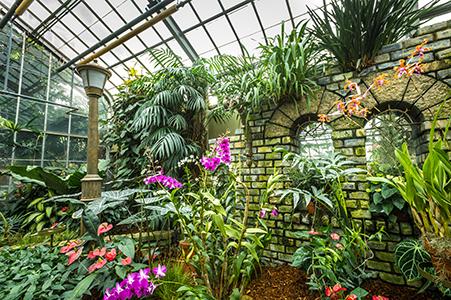 espace pour la vie - jardin botanique - serres
