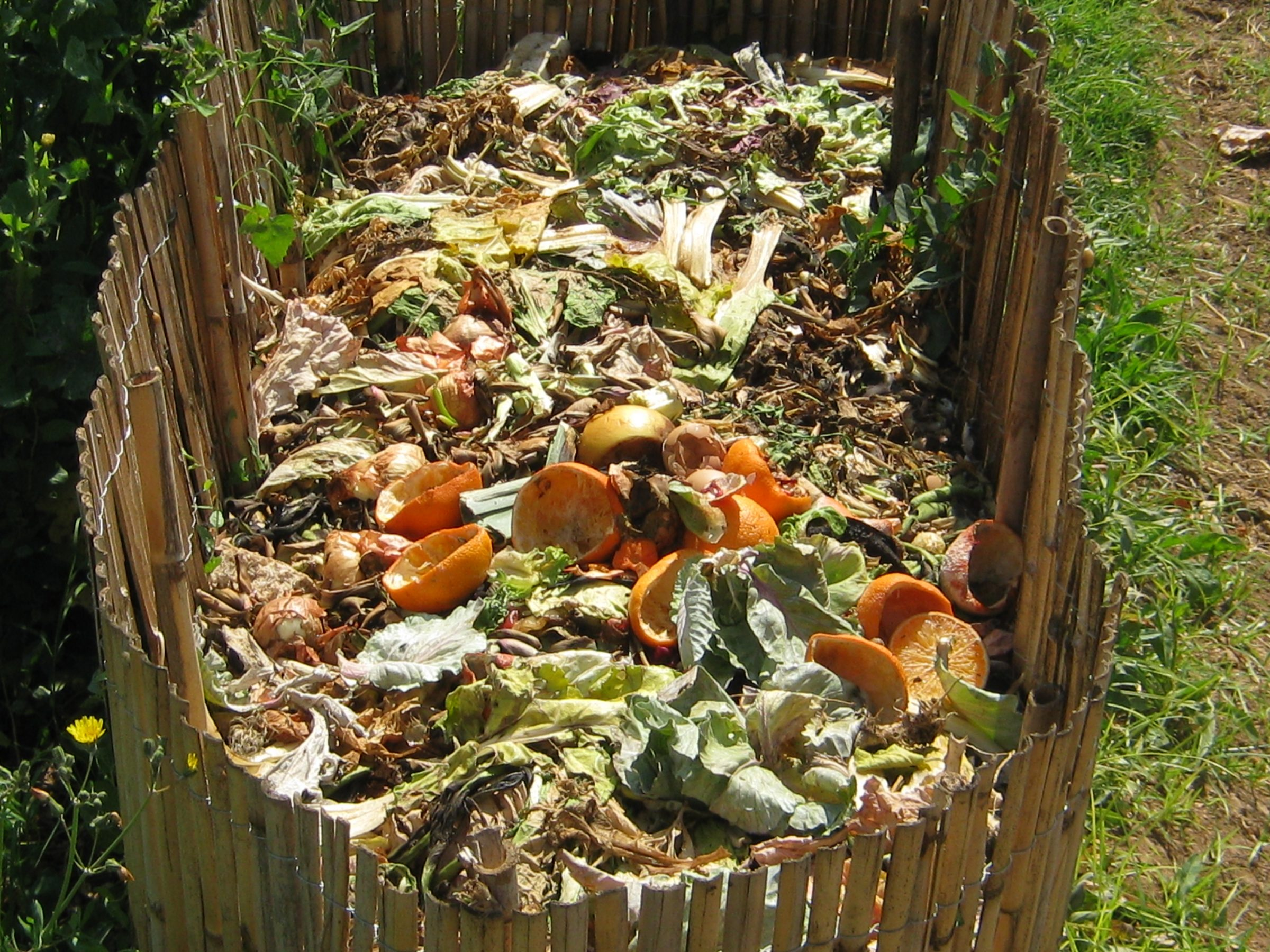 Le compost : quelques explications