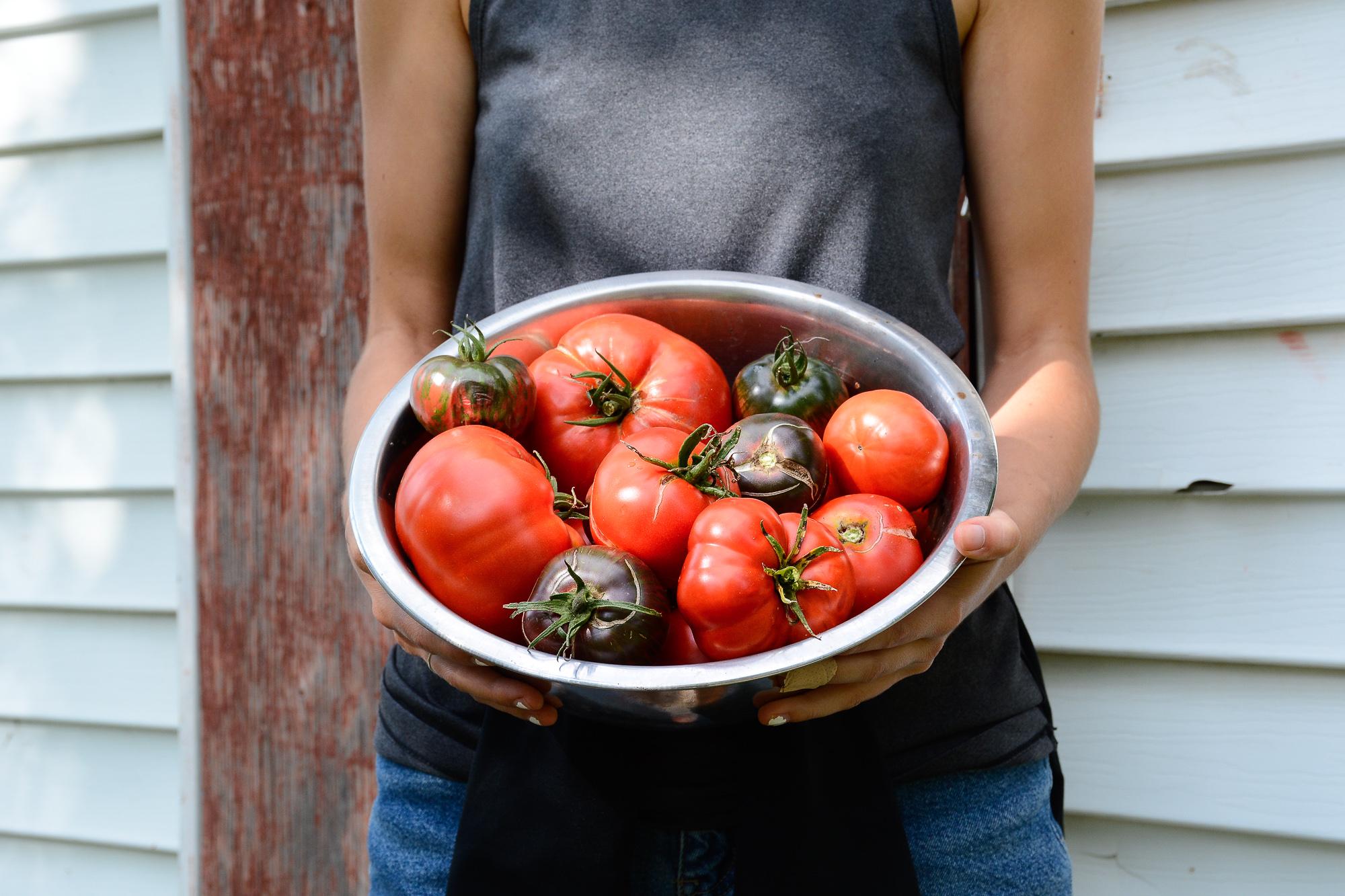 Tomates d'Ahuntsic-Cartierville