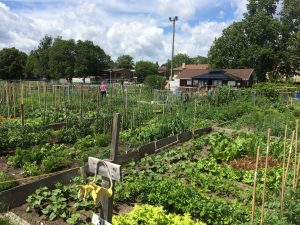 Jardin collectif Ahuntsic-Cartierville