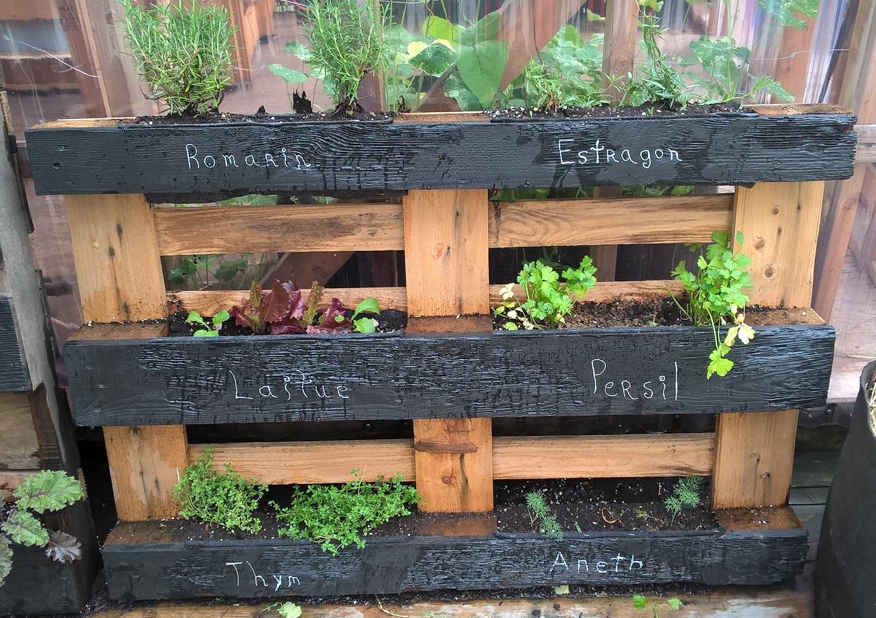 Culture sur palette de fines herbes au Jardin Gamelin à Montréal. Source : Pierre Vessier