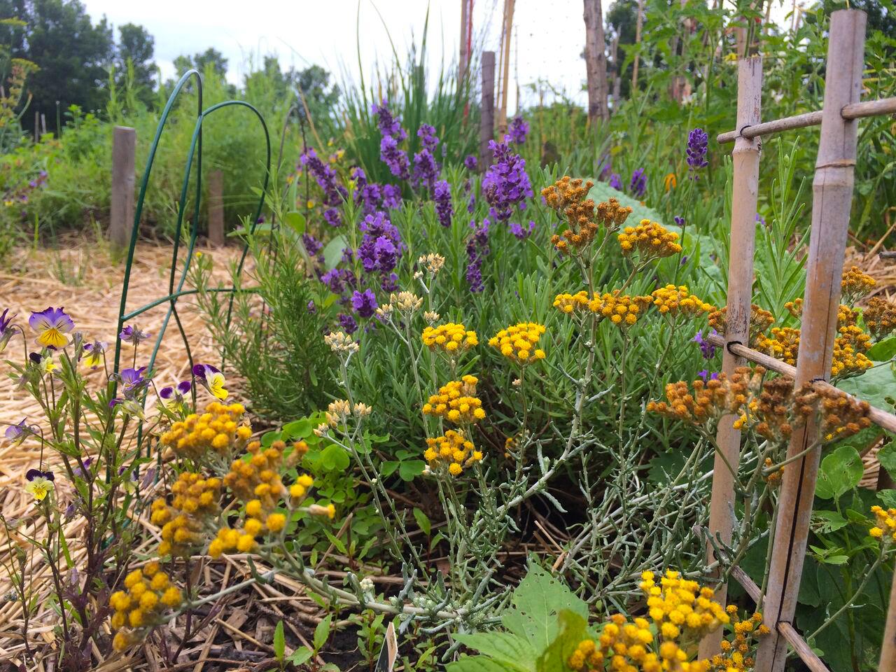 Que Faire Au Jardin En Janvier son jardin en permaculture – ville en vert