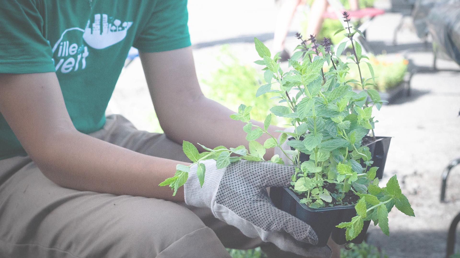 distribution fleurs plantes A-C Ahuntsic Cartierville 2021
