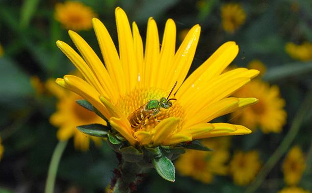 Jardin pour les pollinisateurs