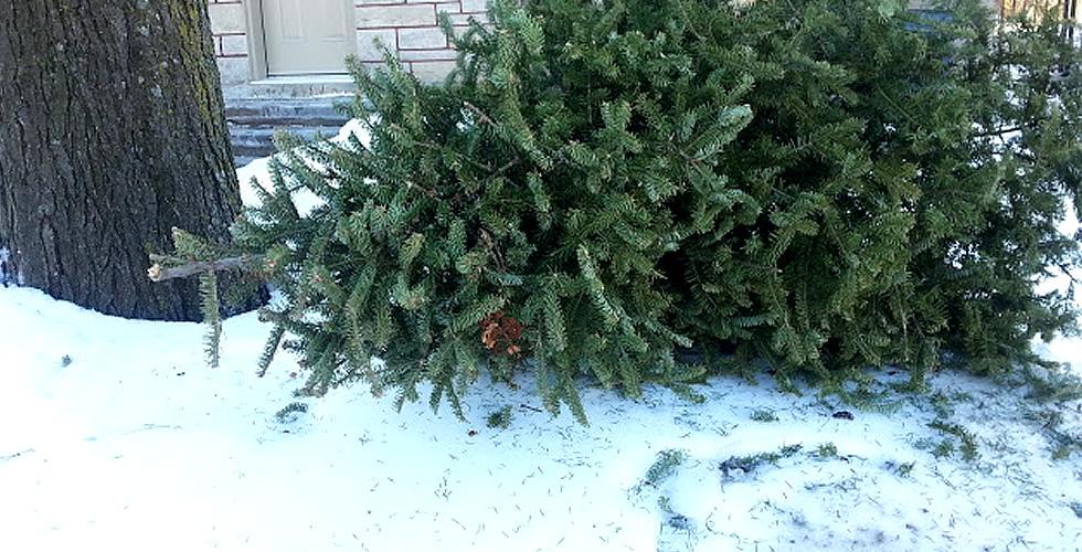 recyclage du sapin de Noël